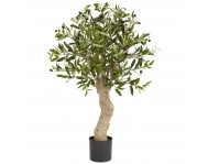 Купить цветок Оливковое Дерево
