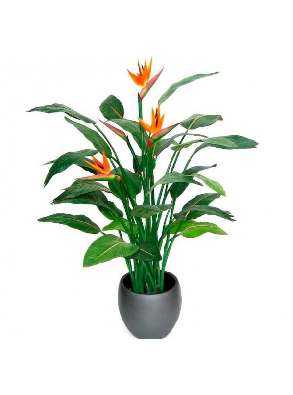 Купить стрелиция комнатный цветок