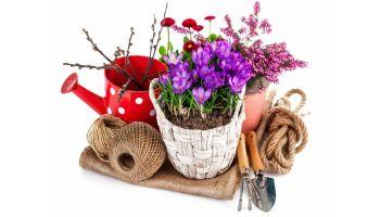 Купить цветы на 8 марта!