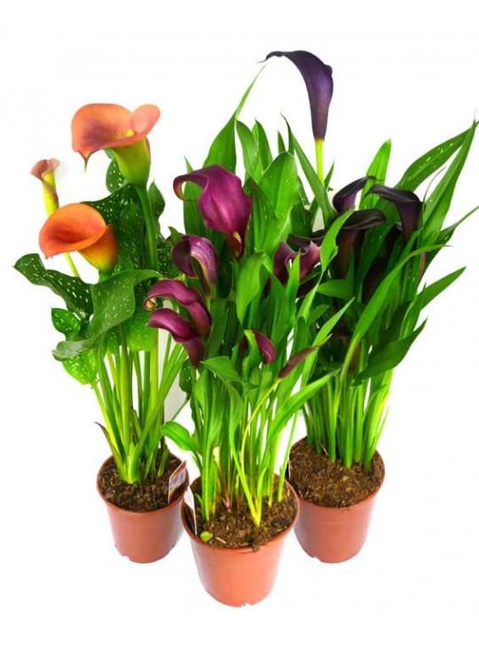 Домашние цветы микс