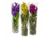 Купить цветок Орхидея Ванда