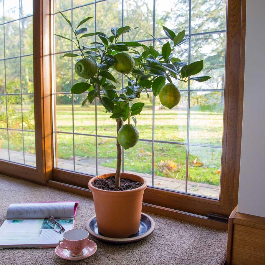 Растения на букву К  domirru